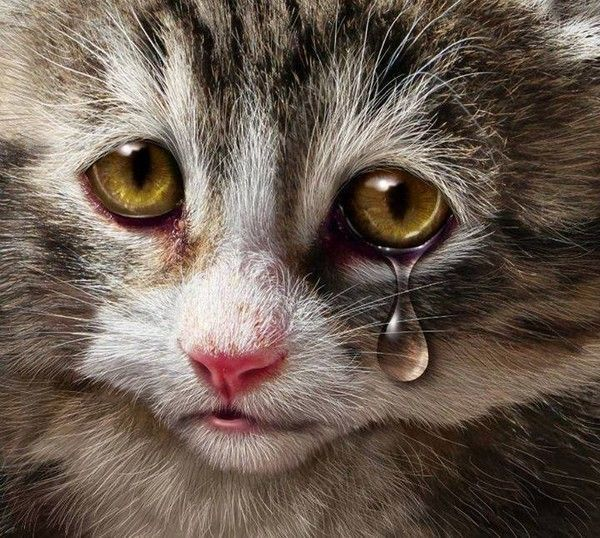 CHAT TRISTE